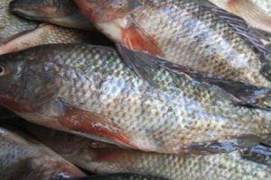 ننشر أسعار الأسماك في السوق المصري اليوم 3-7-2017